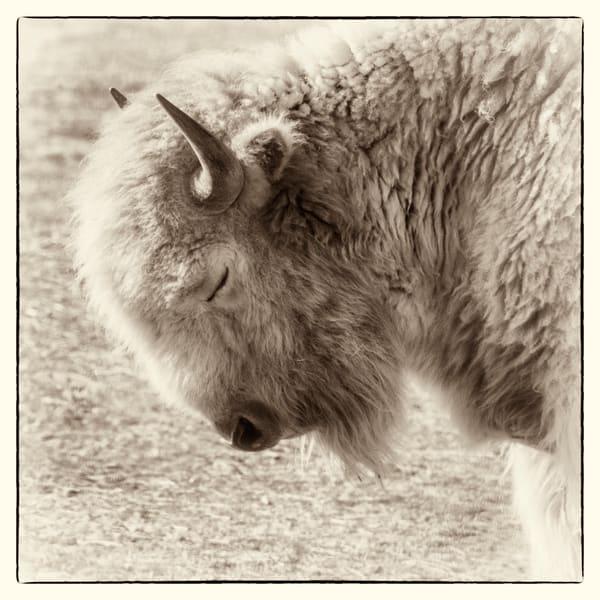 Bow Down Photography Art | Mountain Spirit Photography