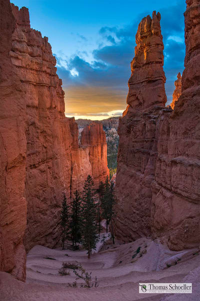Bryce Canyon Navajo Loop Trail from the summit/A sunrise fine art photograph