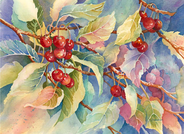 Cherry Delight fine art print by Karen Shanahan.