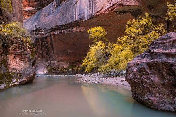 The Virgin River Narrows in Zion National Park Utah / A serene pool reflects autumn foliage available as fine art prints