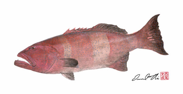 Traditional Gyotaku Paintings | Coral Trout by Desmond Thain