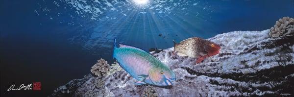 Marine Life Paintings | Love Birds by Desmond Thain