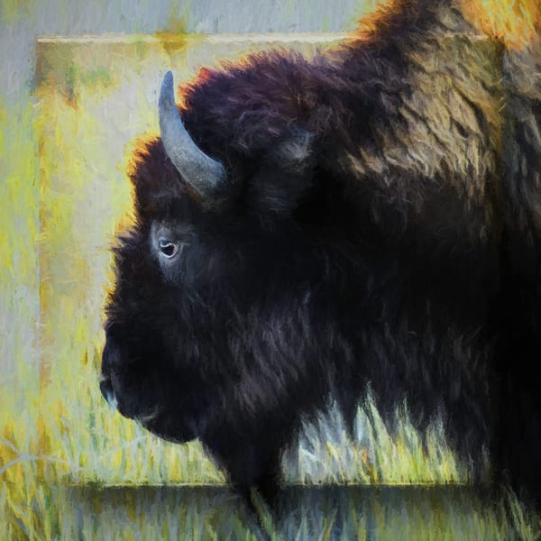Bison Number Six Fine Art
