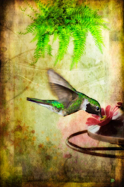 Hummingbird Fine Art