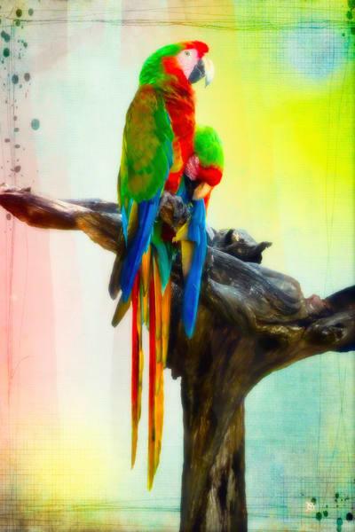 Macaws Fine Art Print
