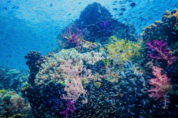 Coral Dreams #3  Photography Art by cbpphoto