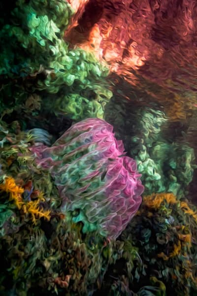 Coral Dreams #4 Photography Art | Carol Brooks Parker Fine Art Photography