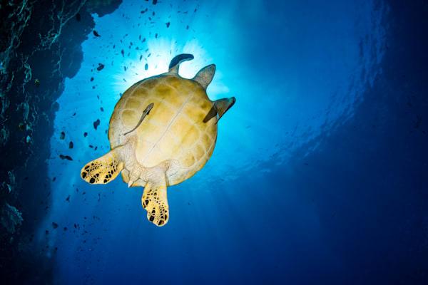 Turtle under the sun
