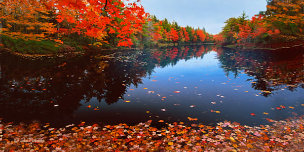 Autumn leaves floating on still water in New England.