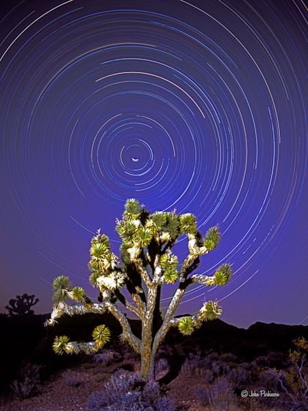 Juniper tree and star trails