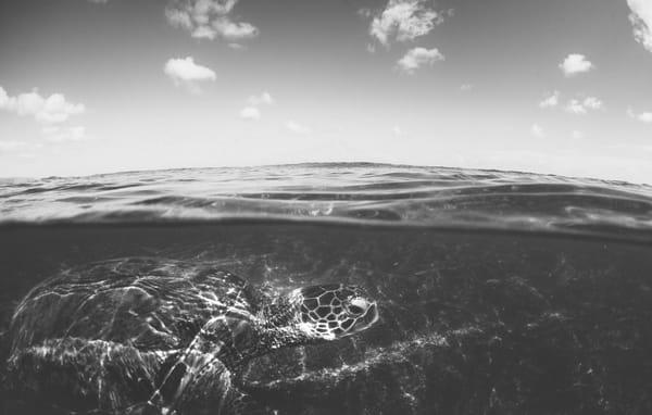 Urtle Under The Sea 1 Photography Art   stephanelacasa