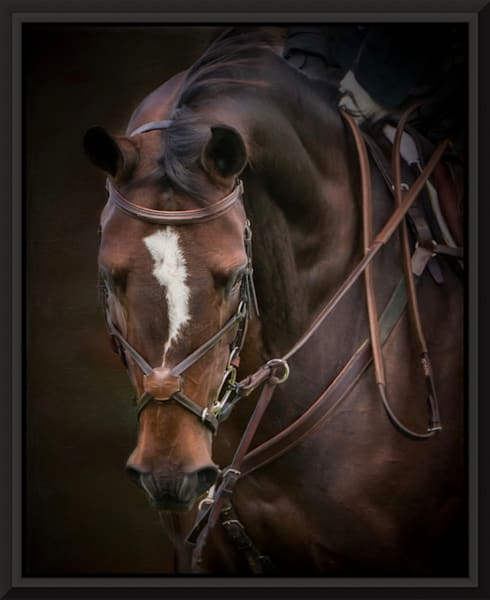 Portrait Of Biscuit  Photography Art | Carol Brooks Parker Fine Art Photography