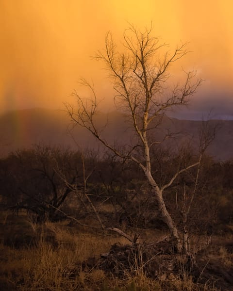 Rain Of Gold Photography Art | Carol Brooks Parker Fine Art Photography