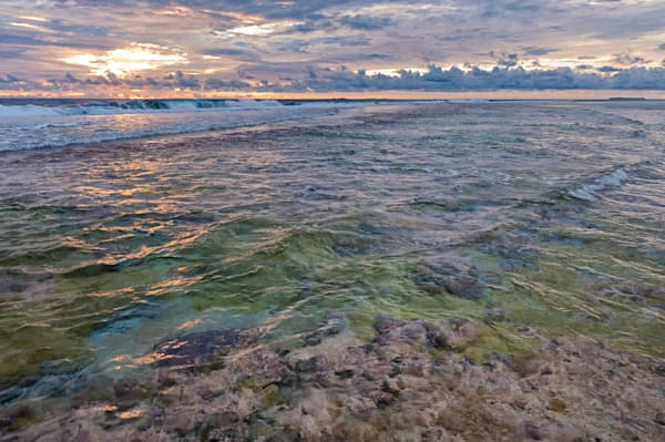 Fringing Reef #2 Photography Art | Carol Brooks Parker Fine Art Photography