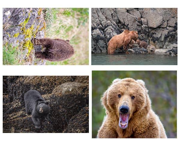 Folio - Bears