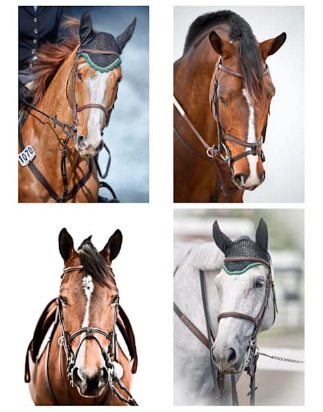 Folio - Equestrian Bridle Portraits