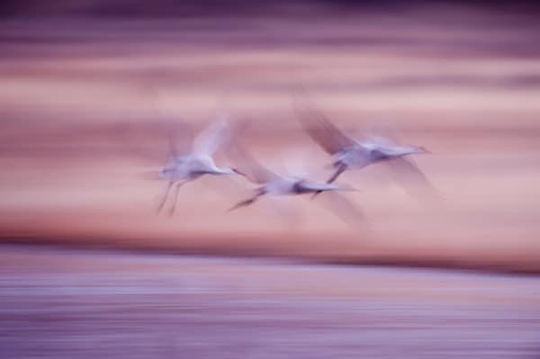 Wingbeats Trio Photography Art | Carol Brooks Parker Fine Art Photography