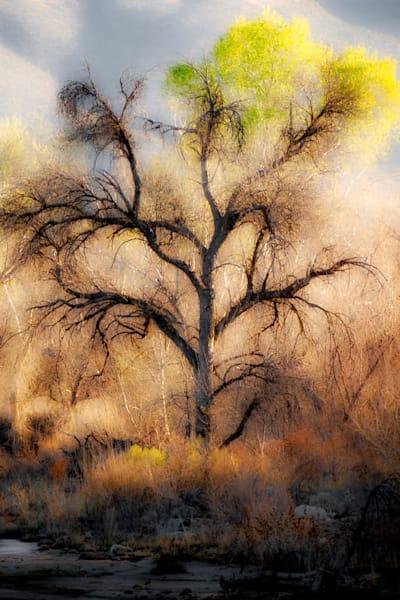 Winter Cottonwood Photography Art | Carol Brooks Parker Fine Art Photography