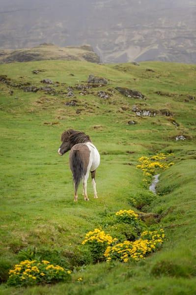 Icelandic Spring