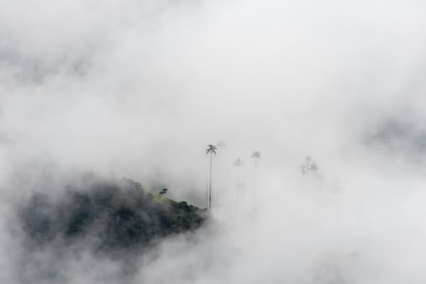 Wax palms through the clouds - Cocora Valley