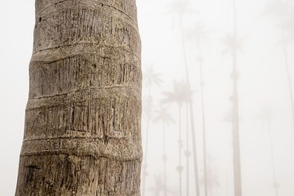 Close up of Wax Palm with mist