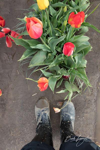 tulips-woodburn-17