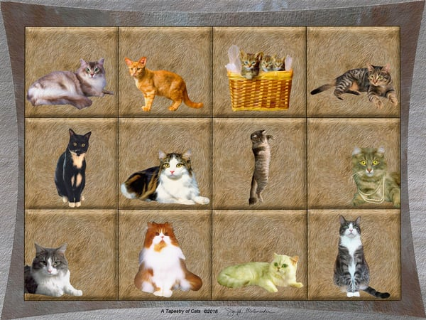 A Tapestry of Cats - The Gallery Wrap Store