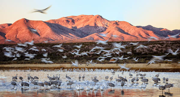Bosque Pond At Dawn Pano Photography Art | Carol Brooks Parker Fine Art Photography