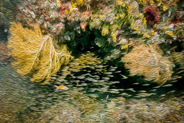 Coral Dreams #2 Photography Art | Carol Brooks Parker Fine Art Photography