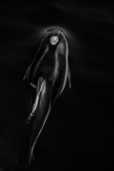 Exhale #1, B&W Photography Art   Carol Brooks Parker Fine Art Photography