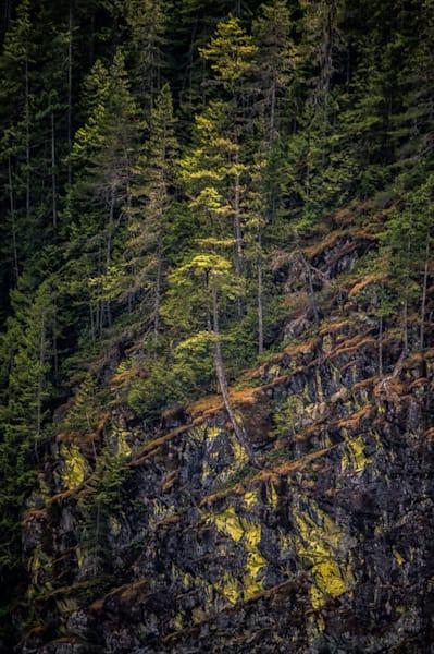 Pines On The Shore Photography Art | Carol Brooks Parker Fine. Art Photography
