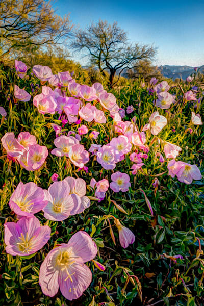Sonoran Spring Photography Art by cbpphoto