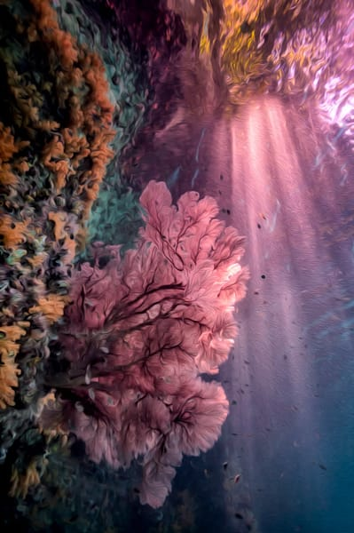Coral Dreams #5 Photography Art | Carol Brooks Parker Fine Art Photography