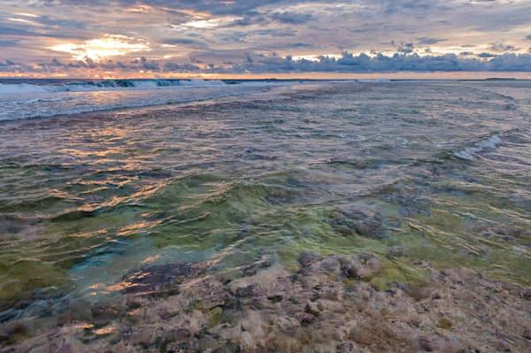 Fringing Reef #2 Lavender Orig Photography Art by cbpphoto