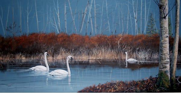 Cranby Lake Swans