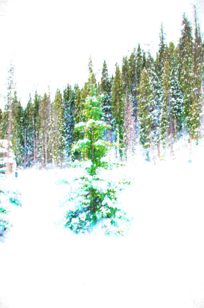 Abstract Colorado Blue Spruce in Snow.