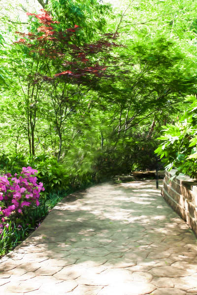 Grapevine Botanic Garden Azaleas