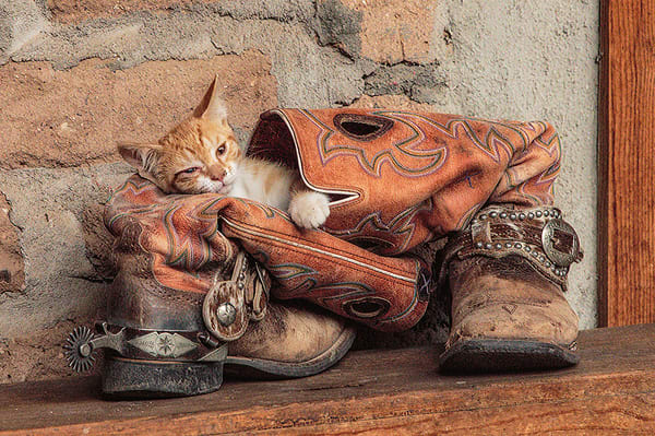 Kit n Boots