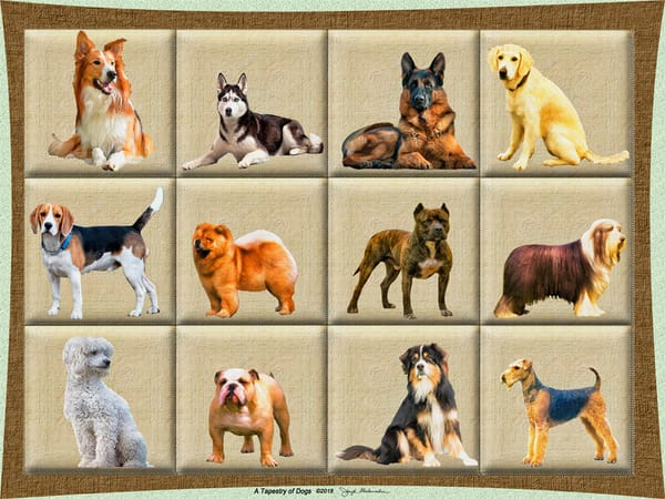 A Tapestry of Dogs