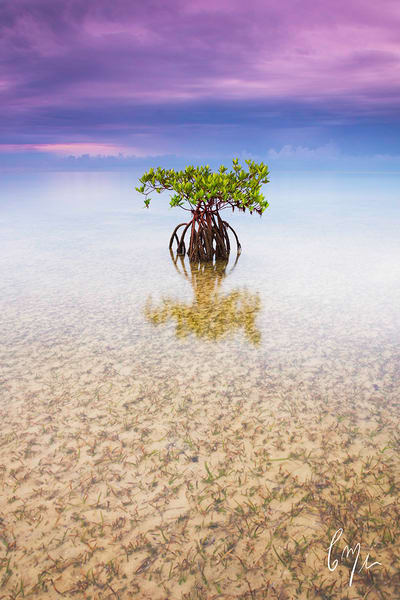 Mangrove Waterscapes and Mangrove Photography | Constance Mier Photography