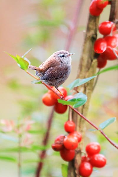 Garden Birds 07 Photography Art | Cheng Yan Studio