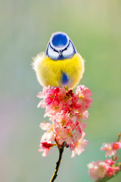 Garden Birds 01 Photography Art | Cheng Yan Studio