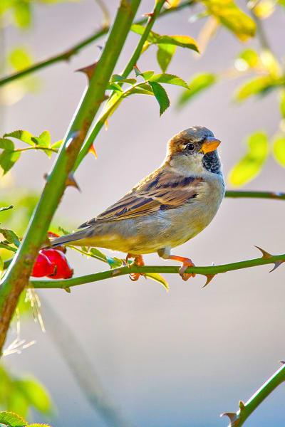 Garden-Birds-14