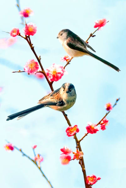 Garden Birds 20 Photography Art | Cheng Yan Studio
