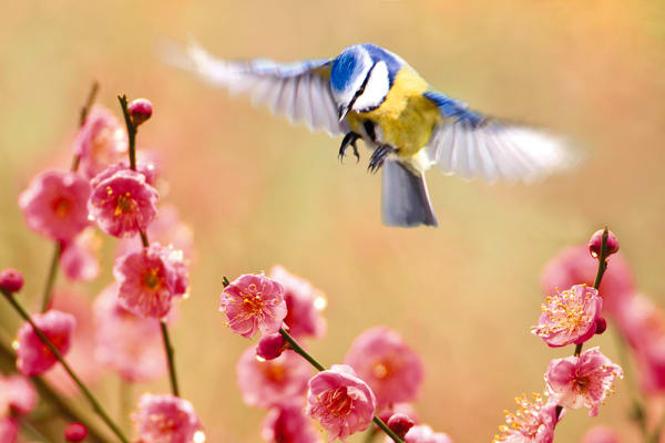 Garden Birds 18 Photography Art | Cheng Yan Studio