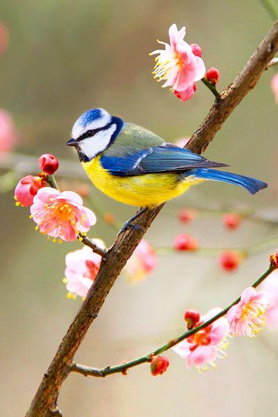 Garden Birds 19 Photography Art | Cheng Yan Studio