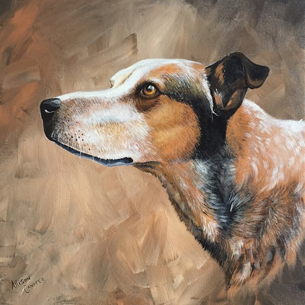 Captain's focus dog portrait by Allison Cantrell