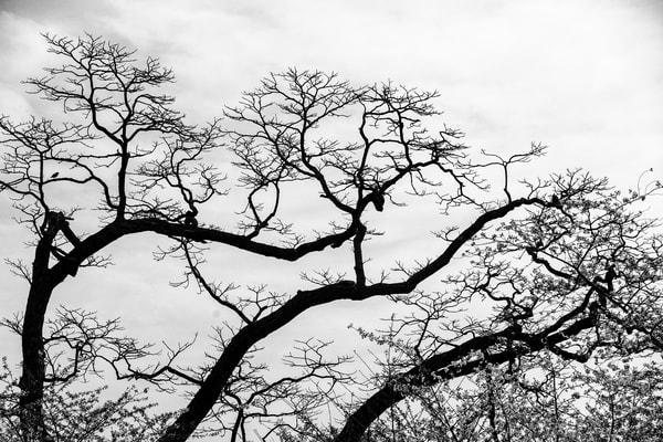 trees--40