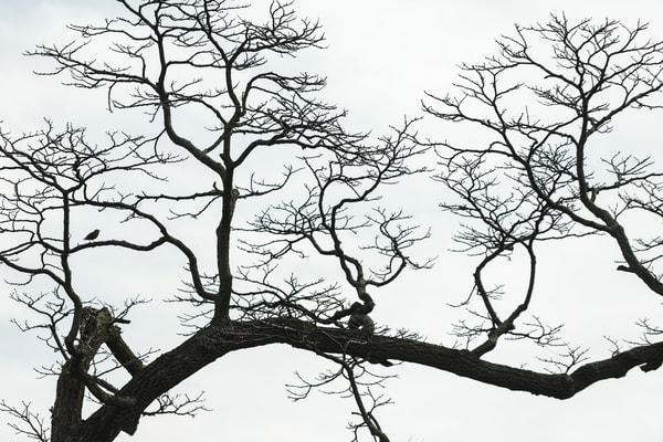 trees--41