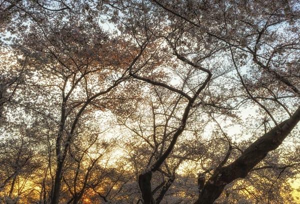 trees--45